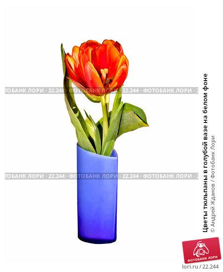 Купить «Цветы тюльпаны в голубой вазе на белом фоне», фото № 22244, снято 9 марта 2007 г. (c) Андрей Жданов / Фотобанк Лори