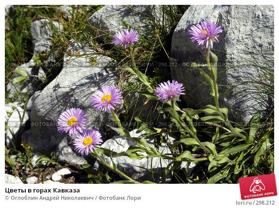 Цветы в горах Кавказа, фото № 298212, снято 27 мая 2017 г. (c) Оглоблин Андрей Николаевич / Фотобанк Лори