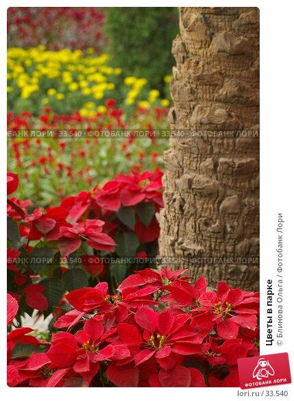 Цветы в парке, фото № 33540, снято 31 декабря 2006 г. (c) Блинова Ольга / Фотобанк Лори