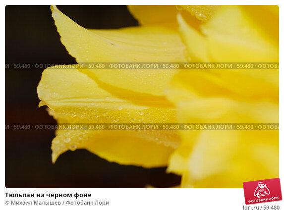 Тюльпан на черном фоне, фото № 59480, снято 8 мая 2007 г. (c) Михаил Малышев / Фотобанк Лори