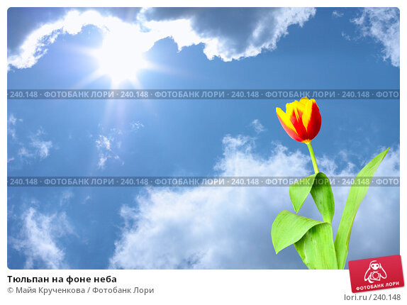 Тюльпан на фоне неба, фото № 240148, снято 23 марта 2008 г. (c) Майя Крученкова / Фотобанк Лори