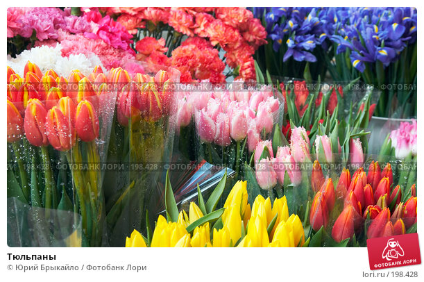 Тюльпаны, фото № 198428, снято 3 февраля 2008 г. (c) Юрий Брыкайло / Фотобанк Лори