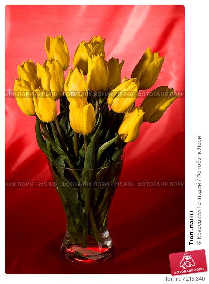 Тюльпаны, фото № 215840, снято 9 мая 2005 г. (c) Кравецкий Геннадий / Фотобанк Лори