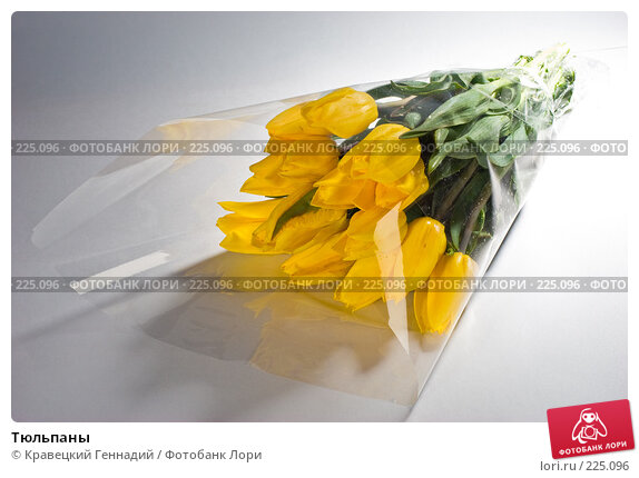 Купить «Тюльпаны», фото № 225096, снято 9 мая 2005 г. (c) Кравецкий Геннадий / Фотобанк Лори