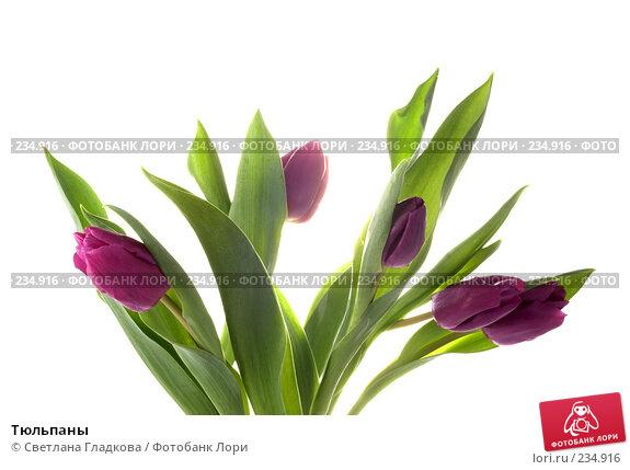 Купить «Тюльпаны», фото № 234916, снято 22 марта 2018 г. (c) Cветлана Гладкова / Фотобанк Лори