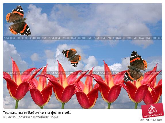 Купить «Тюльпаны и бабочки на фоне неба», фото № 164004, снято 24 апреля 2007 г. (c) Елена Блохина / Фотобанк Лори