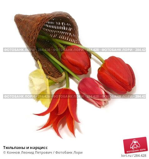 Купить «Тюльпаны и нарцисс», фото № 284428, снято 13 мая 2008 г. (c) Коннов Леонид Петрович / Фотобанк Лори