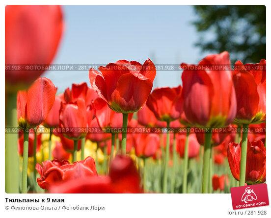 Тюльпаны к 9 мая, фото № 281928, снято 8 мая 2008 г. (c) Филонова Ольга / Фотобанк Лори