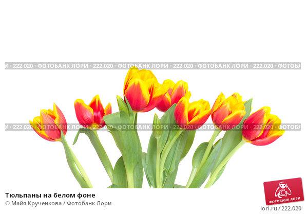 Тюльпаны на белом фоне, фото № 222020, снято 7 марта 2008 г. (c) Майя Крученкова / Фотобанк Лори