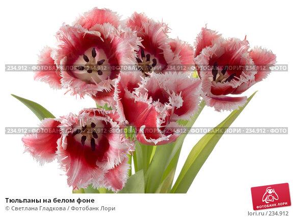 Тюльпаны на белом фоне, фото № 234912, снято 21 февраля 2017 г. (c) Cветлана Гладкова / Фотобанк Лори