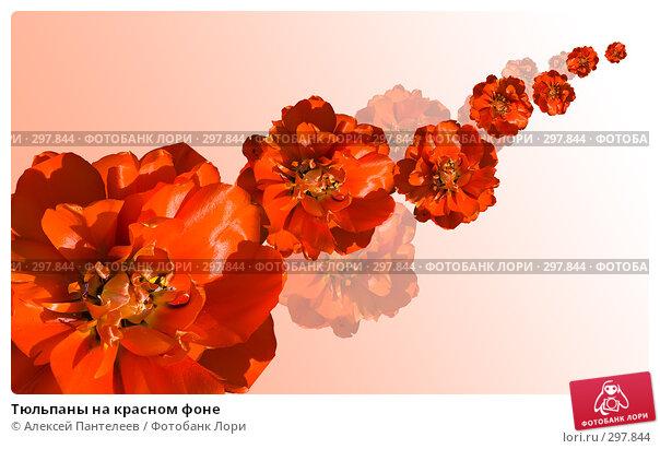 Купить «Тюльпаны на красном фоне», фото № 297844, снято 13 декабря 2017 г. (c) Алексей Пантелеев / Фотобанк Лори