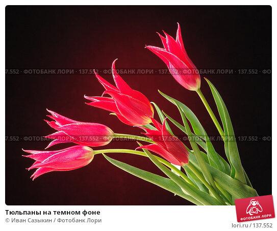 Купить «Тюльпаны на темном фоне», фото № 137552, снято 20 апреля 2004 г. (c) Иван Сазыкин / Фотобанк Лори