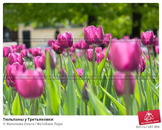 Купить «Тюльпаны у Третьяковки», фото № 281904, снято 1 мая 2008 г. (c) Филонова Ольга / Фотобанк Лори