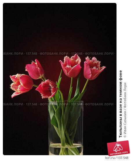 Тюльпаны в вазе на темном фоне, фото № 137548, снято 20 апреля 2004 г. (c) Иван Сазыкин / Фотобанк Лори
