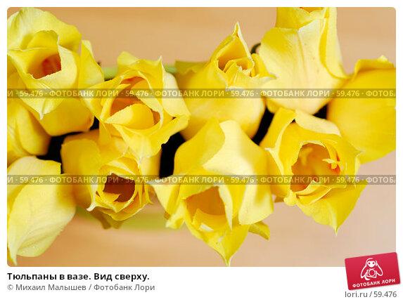 Тюльпаны в вазе. Вид сверху., фото № 59476, снято 8 мая 2007 г. (c) Михаил Малышев / Фотобанк Лори