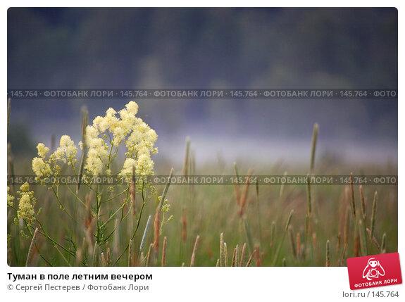 Туман в поле летним вечером, фото № 145764, снято 10 июня 2007 г. (c) Сергей Пестерев / Фотобанк Лори