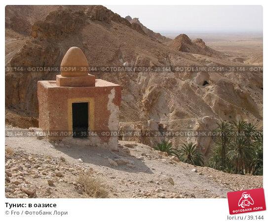 Тунис: в оазисе, фото № 39144, снято 23 июня 2004 г. (c) Fro / Фотобанк Лори