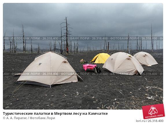 Купить «Туристические палатки в Мертвом лесу на Камчатке», фото № 26318400, снято 27 мая 2018 г. (c) А. А. Пирагис / Фотобанк Лори