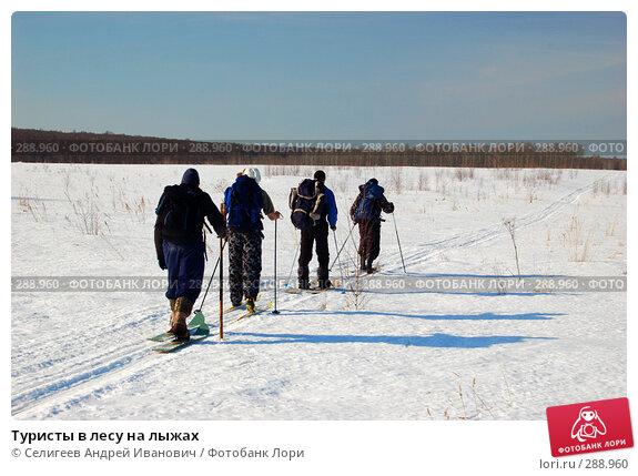 Туристы в лесу на лыжах, фото № 288960, снято 23 марта 2008 г. (c) Селигеев Андрей Иванович / Фотобанк Лори