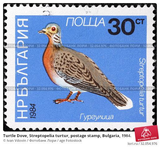 Turtle Dove, Streptopelia turtur, postage stamp, Bulgaria, 1984. (2014 год). Редакционное фото, фотограф Ivan Vdovin / age Fotostock / Фотобанк Лори