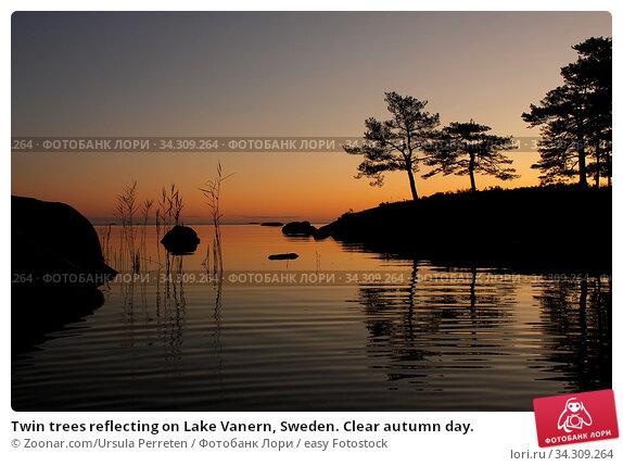 Twin trees reflecting on Lake Vanern, Sweden. Clear autumn day. Стоковое фото, фотограф Zoonar.com/Ursula Perreten / easy Fotostock / Фотобанк Лори
