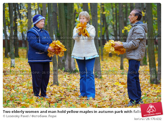 Купить «Two elderly women and man hold yellow maples in autumn park with fallen leaves», фото № 28170632, снято 6 октября 2016 г. (c) Losevsky Pavel / Фотобанк Лори