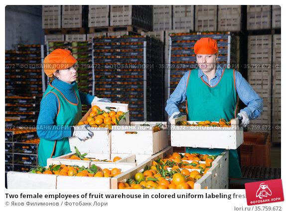 Two female employees of fruit warehouse in colored uniform labeling fresh ripe mandarins in crates. Стоковое фото, фотограф Яков Филимонов / Фотобанк Лори