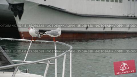 Two seagulls sitting on a boat railing. Стоковое видео, видеограф Игорь Жоров / Фотобанк Лори