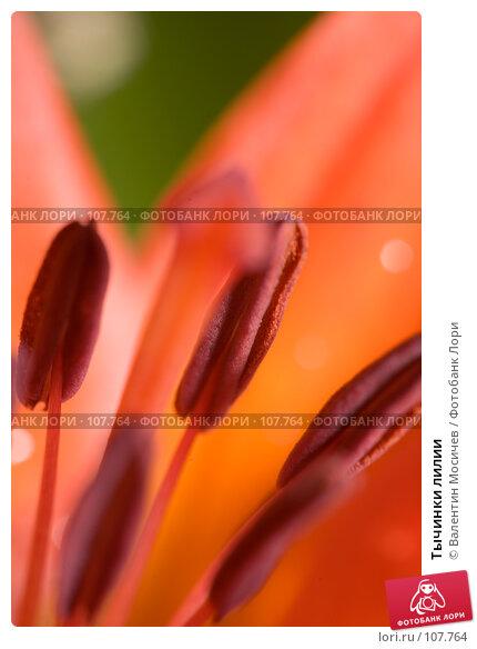 Тычинки лилии, фото № 107764, снято 8 июля 2007 г. (c) Валентин Мосичев / Фотобанк Лори