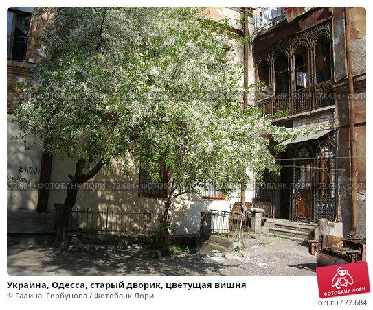 Украина, Одесса, старый дворик, цветущая вишня, фото № 72684, снято 1 мая 2005 г. (c) Галина  Горбунова / Фотобанк Лори