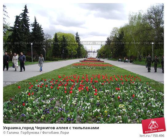 Украина,город Чернигов аллея с тюльпанами, фото № 150496, снято 27 апреля 2006 г. (c) Галина  Горбунова / Фотобанк Лори