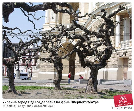 Украина,город Одесса,деревья на фоне Оперного театра, фото № 177384, снято 1 мая 2005 г. (c) Галина  Горбунова / Фотобанк Лори