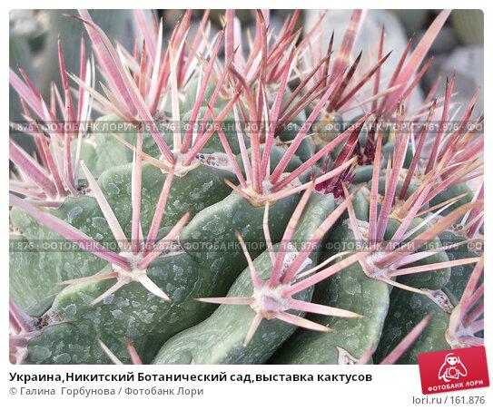 Украина,Никитский Ботанический сад,выставка кактусов, фото № 161876, снято 22 июня 2005 г. (c) Галина  Горбунова / Фотобанк Лори