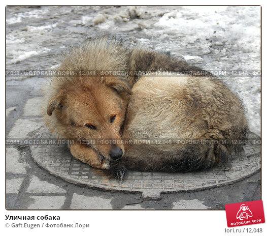 Уличная собака, фото № 12048, снято 24 июня 2017 г. (c) Gaft Eugen / Фотобанк Лори