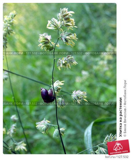 Улитка на растении, фото № 127532, снято 1 июля 2007 г. (c) Бяков Вячеслав / Фотобанк Лори