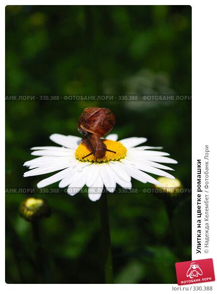 Купить «Улитка на цветке ромашки», фото № 330388, снято 12 июня 2008 г. (c) Надежда Келембет / Фотобанк Лори