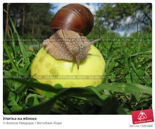 Улитка на яблоке, фото № 320664, снято 10 сентября 2006 г. (c) Алексас Кведорас / Фотобанк Лори