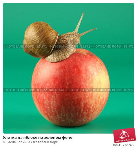 Улитка на яблоке на зеленом фоне, фото № 83972, снято 13 сентября 2007 г. (c) Елена Блохина / Фотобанк Лори