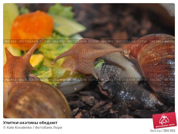 Купить «Улитки-ахатины обедают», фото № 384992, снято 20 июля 2008 г. (c) Kate Kovalenko / Фотобанк Лори
