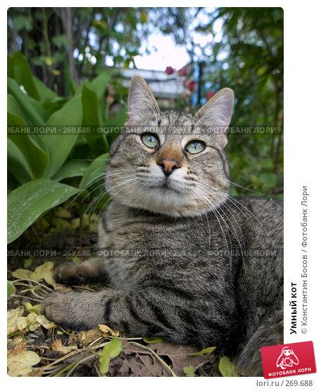 Умный кот, фото № 269688, снято 26 апреля 2017 г. (c) Константин Босов / Фотобанк Лори