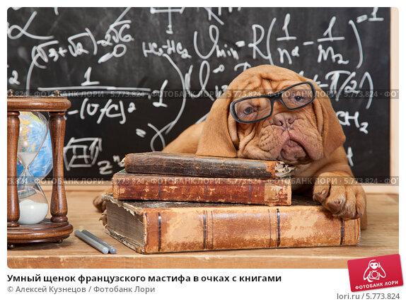 Купить «Умный щенок французского мастифа в очках с книгами», фото № 5773824, снято 23 марта 2014 г. (c) Алексей Кузнецов / Фотобанк Лори