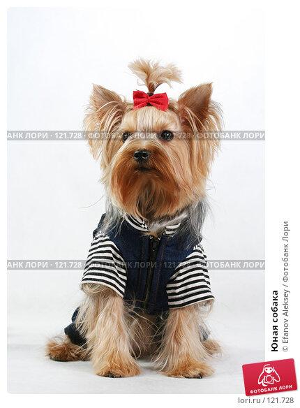 Купить «Юная собака», фото № 121728, снято 11 февраля 2007 г. (c) Efanov Aleksey / Фотобанк Лори