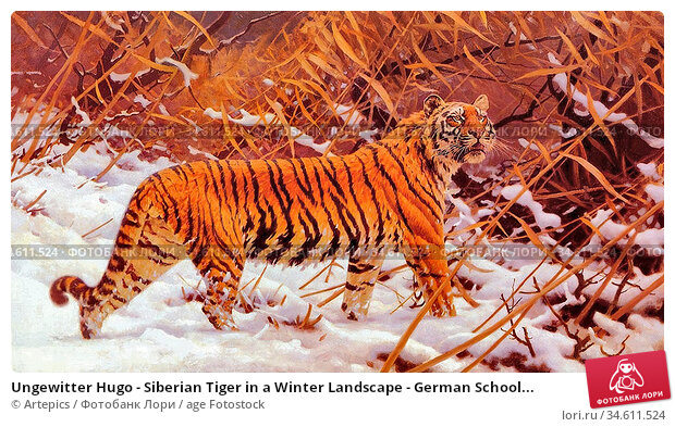 Ungewitter Hugo - Siberian Tiger in a Winter Landscape - German School... Редакционное фото, фотограф Artepics / age Fotostock / Фотобанк Лори