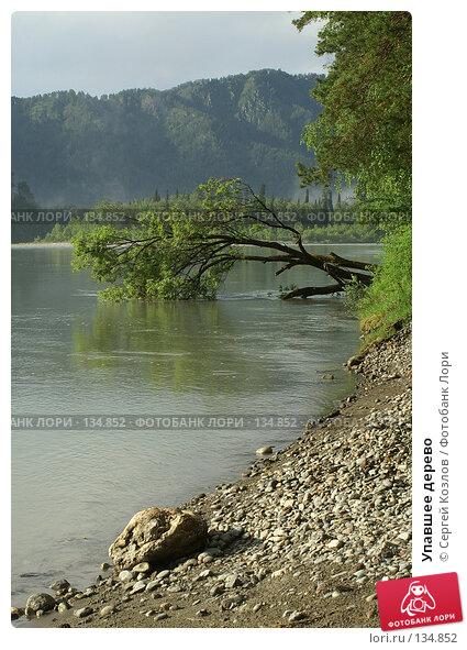 Упавшее дерево, фото № 134852, снято 30 июня 2006 г. (c) Сергей Козлов / Фотобанк Лори