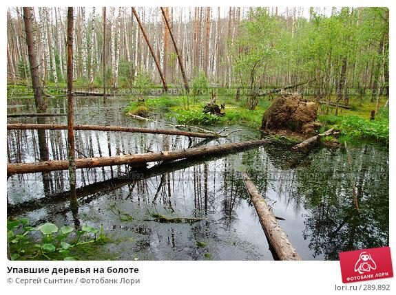 Упавшие деревья на болоте, фото № 289892, снято 30 июня 2007 г. (c) Сергей Сынтин / Фотобанк Лори