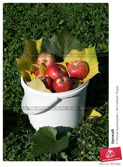 Урожай, фото № 87024, снято 22 сентября 2007 г. (c) Юлия Кузнецова / Фотобанк Лори