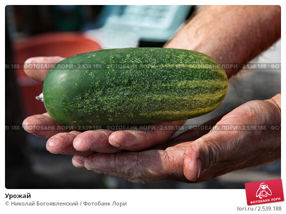 Купить «Урожай», фото № 2539188, снято 29 августа 2010 г. (c) Николай Богоявленский / Фотобанк Лори