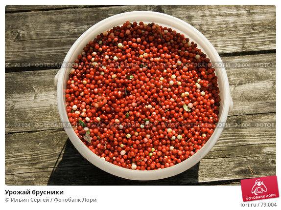Урожай брусники, фото № 79004, снято 19 августа 2007 г. (c) Ильин Сергей / Фотобанк Лори