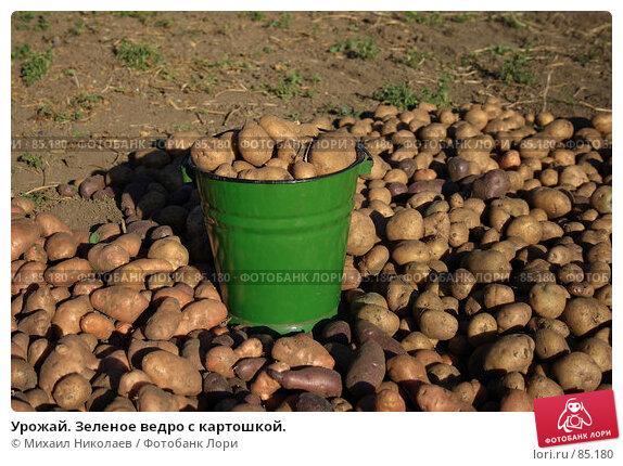 Урожай. Зеленое ведро с картошкой., фото № 85180, снято 9 сентября 2007 г. (c) Михаил Николаев / Фотобанк Лори