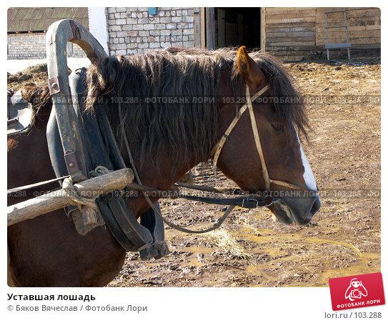 Уставшая лошадь, фото № 103288, снято 25 июля 2017 г. (c) Бяков Вячеслав / Фотобанк Лори